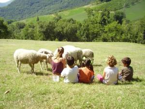 relazionarsi con gli animali