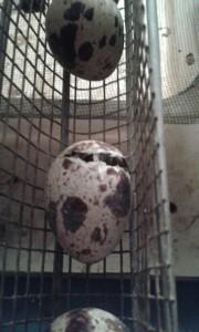 rottura uovo